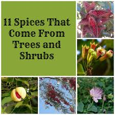 Decorative Trees In India 10 Shrubs For Zone 10 Shrubs That Grow In The Heat