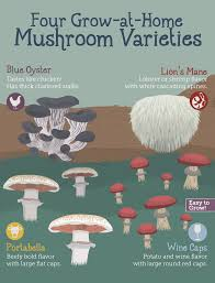 growing mushrooms at home fix com