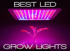 Plant Lights How To Choose by Apollo Led Ufo 180w Grow Light Growth Results U0026 Final Review
