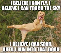 I Believe I Can Fly Meme - r kelly s dog after hitting the reefer imgflip