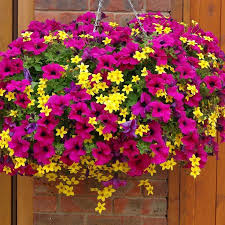 26 best hanging flower basket ideas images on pinterest hanging