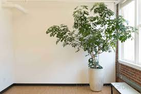 interior landscaping by everything grows