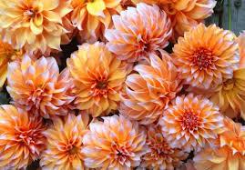 november seasonal flowers seasonal flower alliance november 9 floret flowers