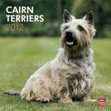 cairn hair cuts bossie has had a hair cut cairn terriers pinterest hair
