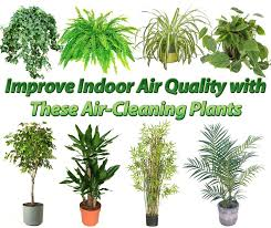 best plants for air quality 15 best air purifying plants houseplants plants and indoor air
