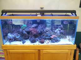 unique fish tanks ideas for your home decoration