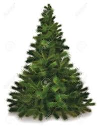evergreen tree clipart many interesting cliparts