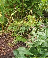 fall and winter prep in my perennial garden u2014 swansons nursery