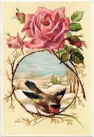Vintage Rose Home Decor by Best 25 Vintage Roses Ideas Only On Pinterest Rose Images Love