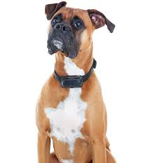boxer dog grooming pet grooming concord pleasant hill walnut creek
