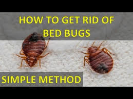 how can you get rid of bed bugs amazing top 17 natural ways to get rid of bedbugs within natural