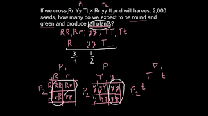 how to calculate a genotype with a rule of probability youtube