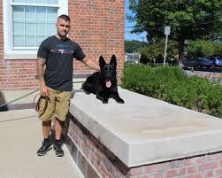 belgian sheepdog rescue illinois tsa overwhelmed by interest in adoption of retired dogs pups who