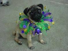 mardi gras dog collars from custom mardi gras dog costume 1a for mardi gras