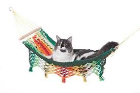 toucan hammocks cat hammocks u0026 human hammocks too hammock town