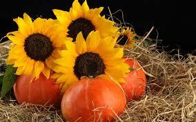 autumn decorations flower sunflowers autumn decorations pumpkins hay fall flower