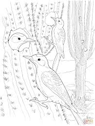cactus wren nest in saguaro coloring page free printable