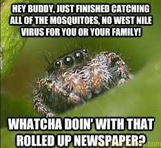 Hey Buddy Meme - spider hey buddy just finished catching all of the moquitoes no