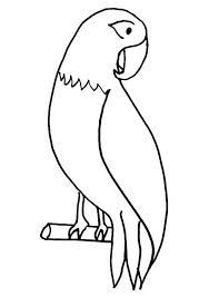 pet parrot coloring download u0026 print coloring pages