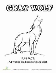 coloring page of wolf gray wolf fun fact coloring page worksheet education com