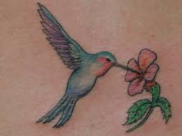 hummingbird tattoos u2013 tattoo collections com
