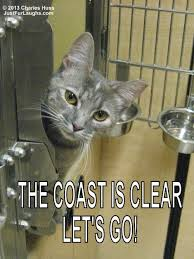 Clear Meme - the coast is clear just fur laughs