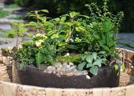 65 best garden container u0026 fairy images on pinterest fairy