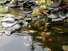 How To Make A Koi Pond In Your Backyard Step By Step Pond Building Koi Pond In Garden With A Waterfall