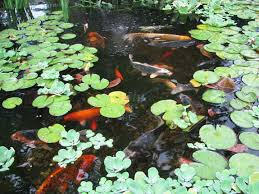 Aquascape Nj Spring U0026 Summer Pond Maintenance South Jersey Camden Burlington Nj