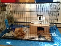 Rabbit Hutch Set Up Dog Crate Rabbit Cage U2013 Journeyday