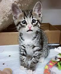 Cat Instagram Bum Worried Cat Instagram Slideshow