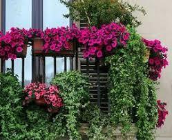 Apartment Patio Garden Ideas Tiny Apartment Patio Flower Staradeal