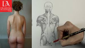 Anatomy Of Body Muscles Muscles In Human Body Video Lesson By Drawing Academy Drawing