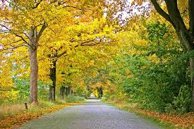 midwest fall planting of trees and shrubs arbor hill trees omaha