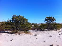 provincetown cape cod ma 02657 dunes 101