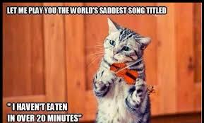 meritorious wonderful funny cat meme dump album on imgur