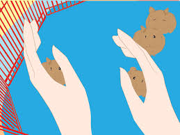 how to care for your pregnant hamster with pictures wikihow