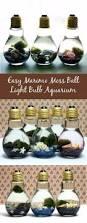 41 of the easiest diys ever marimo moss ball simple craft