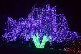 zoo lights houston prices the outlaw gardener on the ninth day of christmas zoo lights the