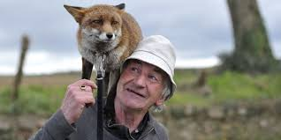 after this man rescued these adorable fox pups they refused to