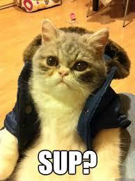 Sup Meme - sup bro cat quickmeme