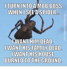 Meme Spider - i turn into a mob boss when i see a spider i want him dead i want