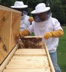 How To Make A Top Bar Beehive 5 Things You Didn U0027t Know About Top Bar Hives
