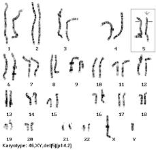 karyotype worksheet answers blackett family dna activity free