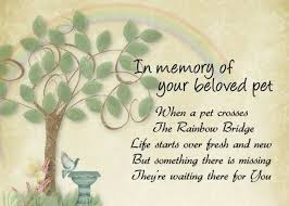 the loss of a pet 47 best beloved pets rainbow bridge images on pets