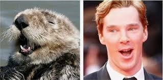 Cumberbatch Otter Meme - does benedict cumberbatch cop otter impressions rub mint