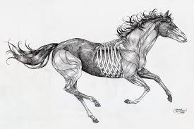 anatomical horse tattoo by paintinggael on deviantart