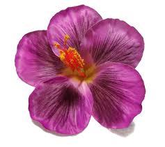 flower hair clip hibiscus flower hair clip
