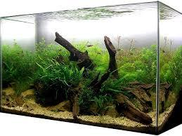 Aquascape Designs For Aquariums Best 25 Aquarium Setup Ideas On Pinterest Freshwater Aquarium