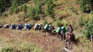 thanksgiving in the wilderness montana elk u0026 mule deer hunting trips wilderness pack in hunting